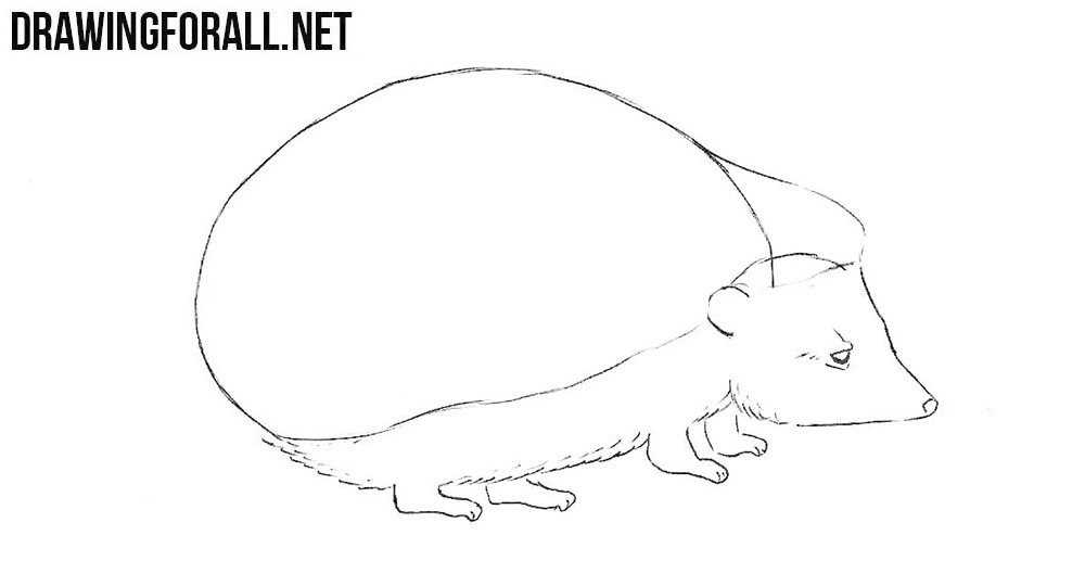 How to sketch a hedgehog step by step