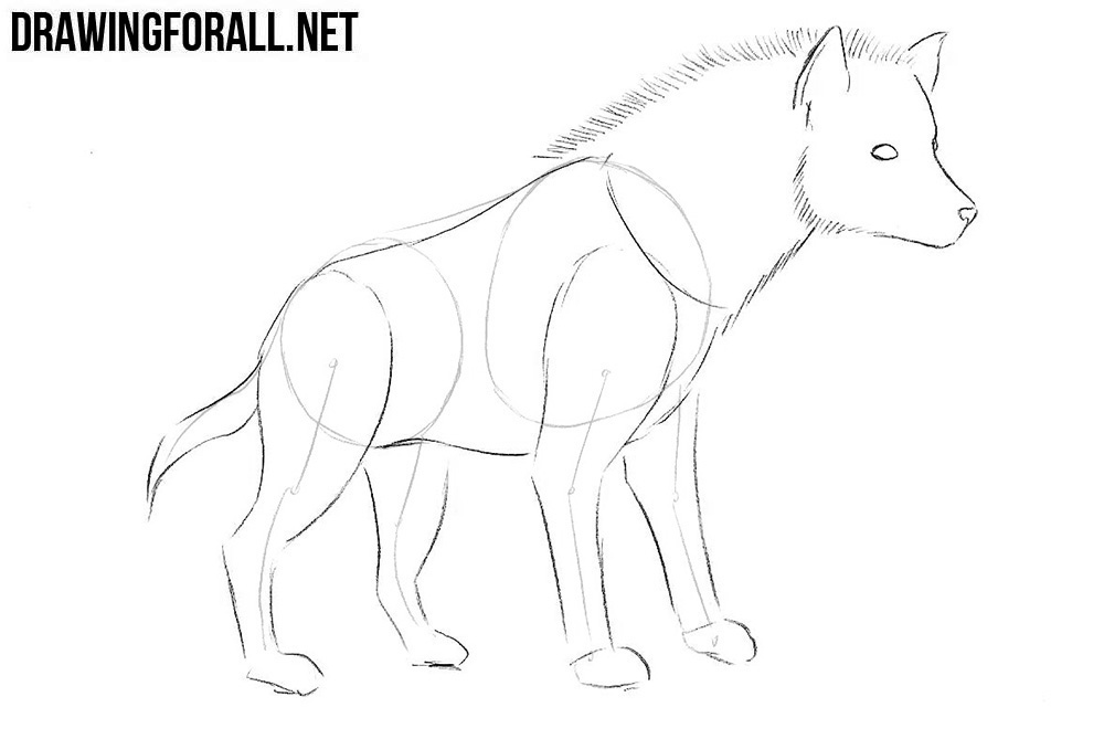 How to sketch a hyena