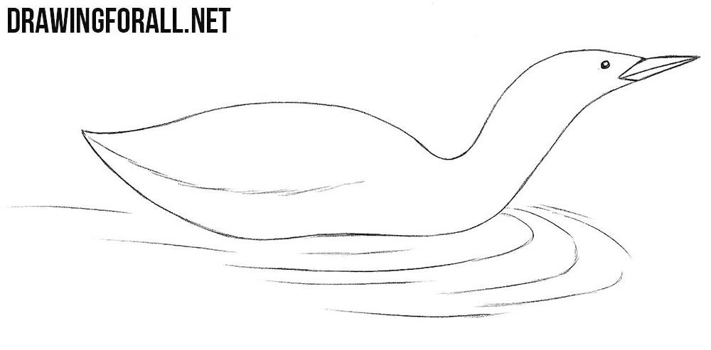 Loon drawing