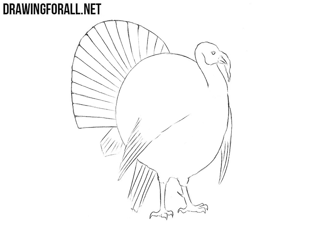 Turkey drawing tutorial