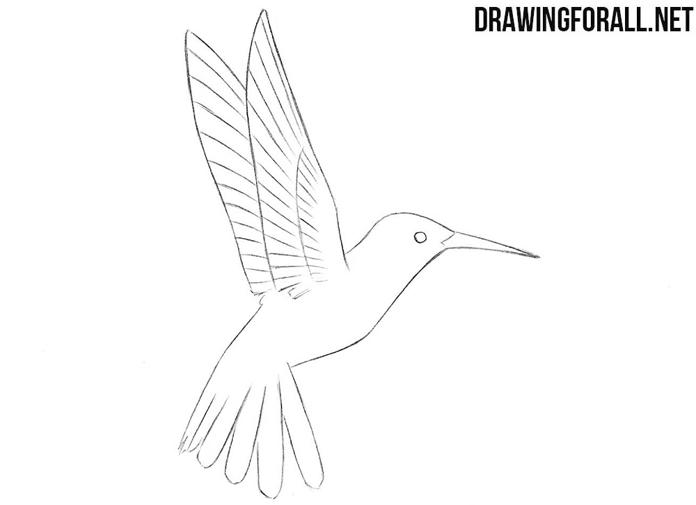 humming bird drawing