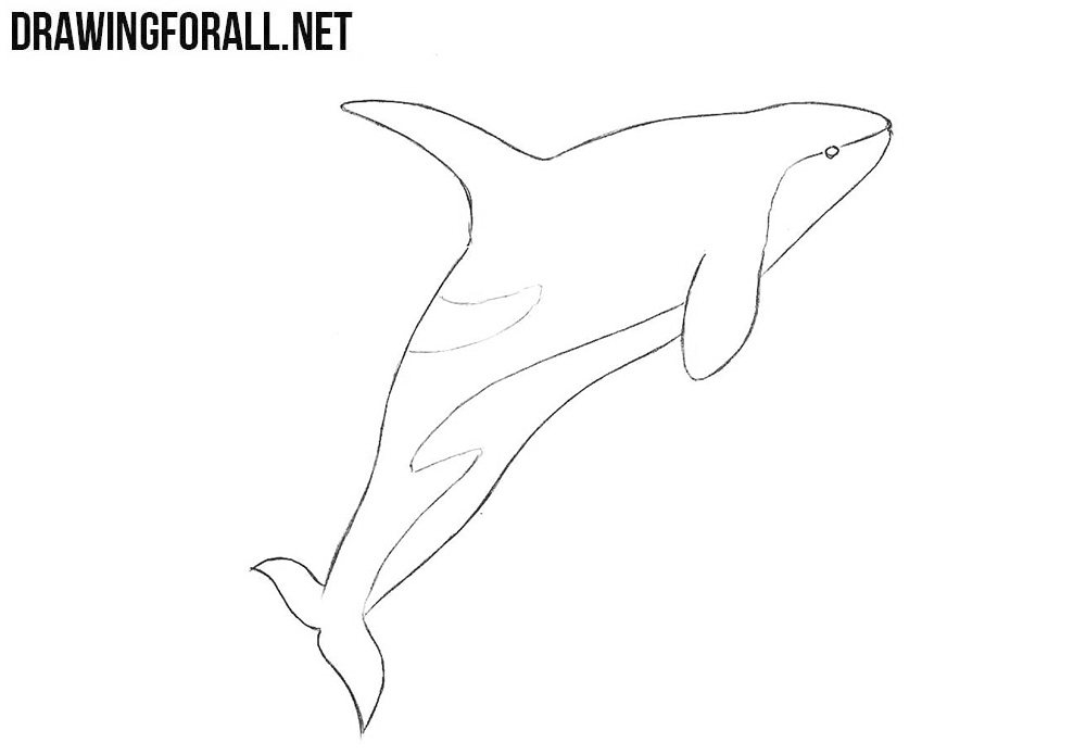 killer whale drawing