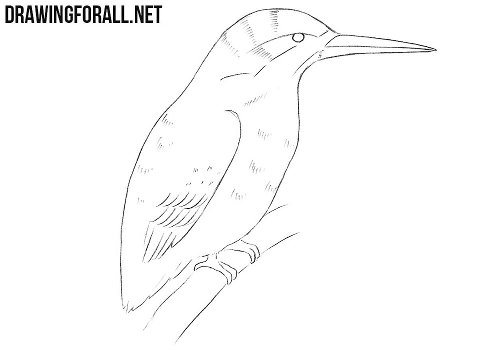 kingfisher drawing tutorial