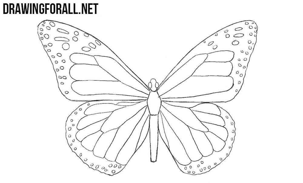 How to Draw a Butterfly | Drawingforall.net