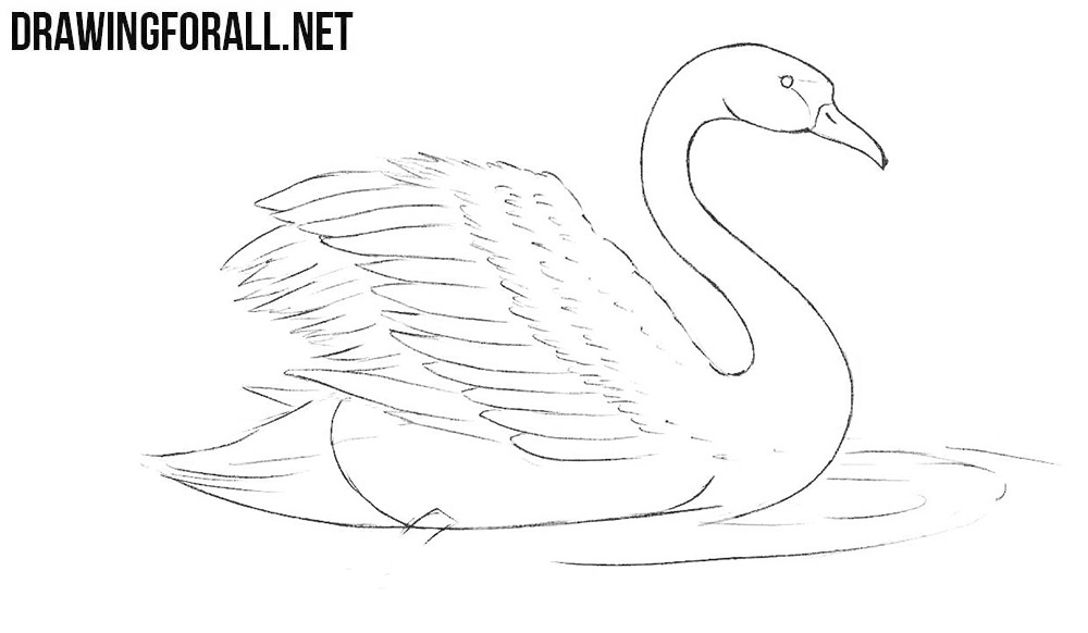 How to draw a beautiful swan