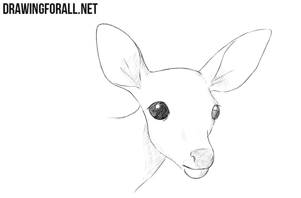 How To Draw A Deer Head Drawingforall Net