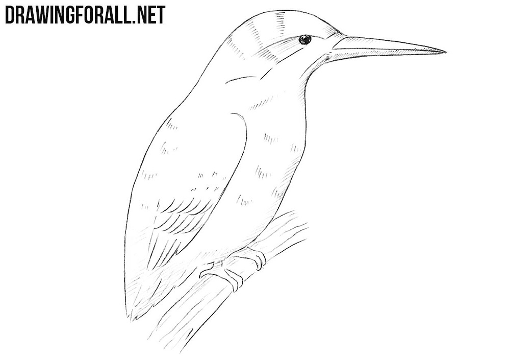 How To Draw A Kingfisher Drawingforall Net