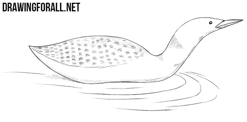 how to draw a loon drawingforall net