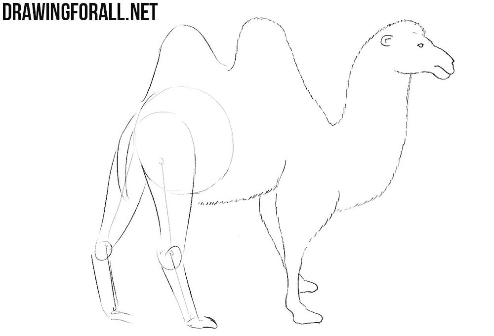 How to sketch a camel
