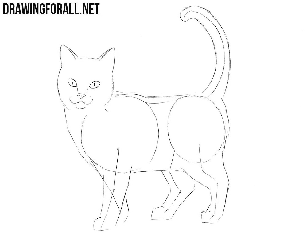 How To Draw A Cat Drawingforall Net
