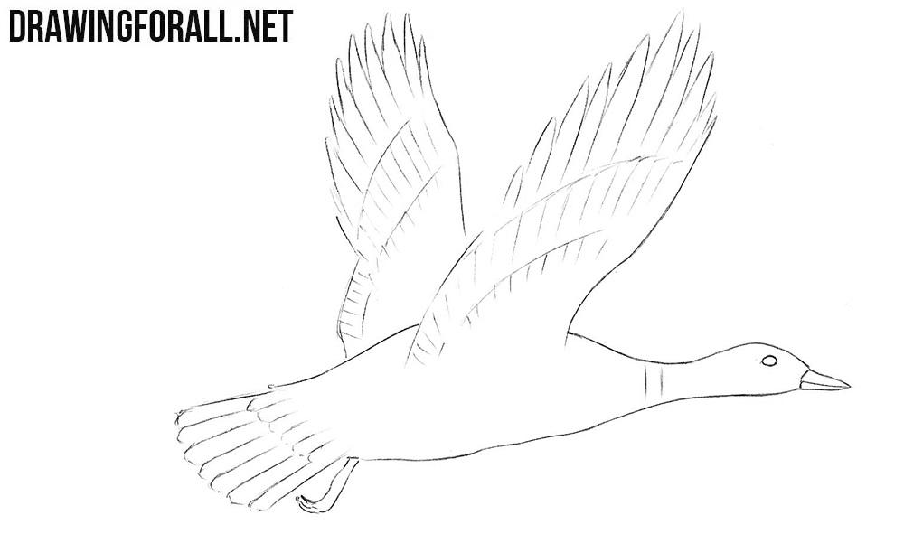 Mallard drawing