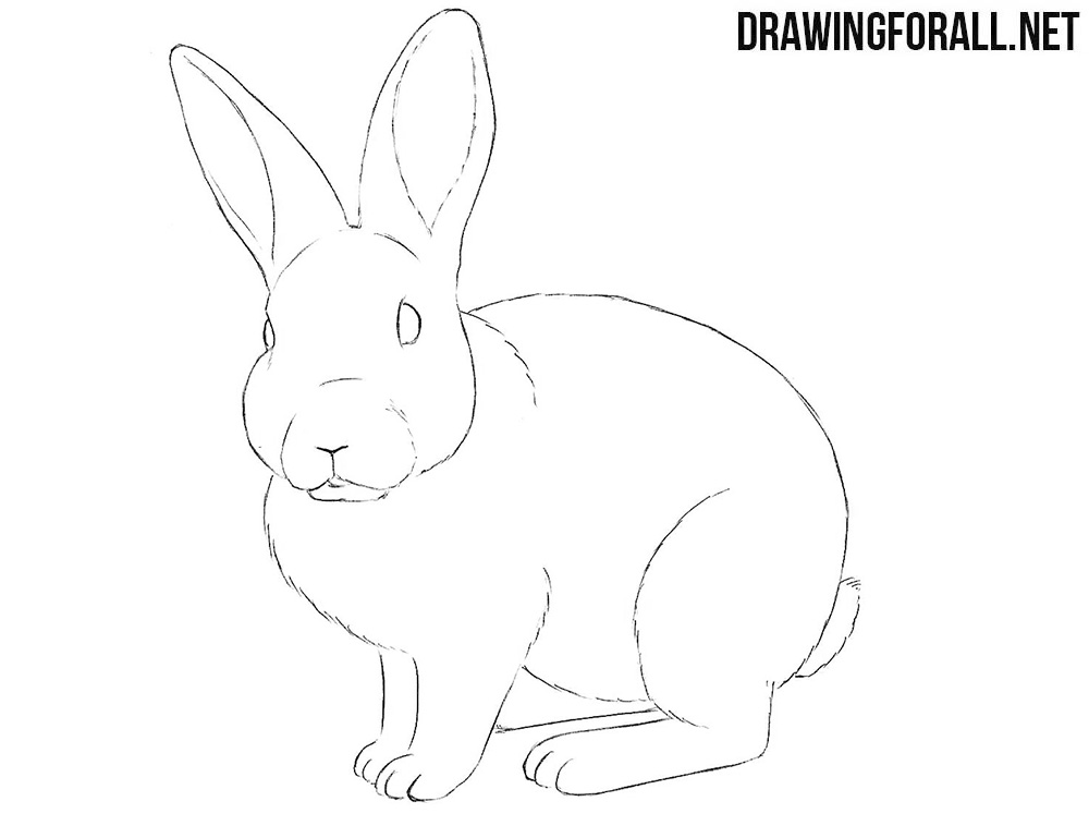 Rabbit drawing tutorial