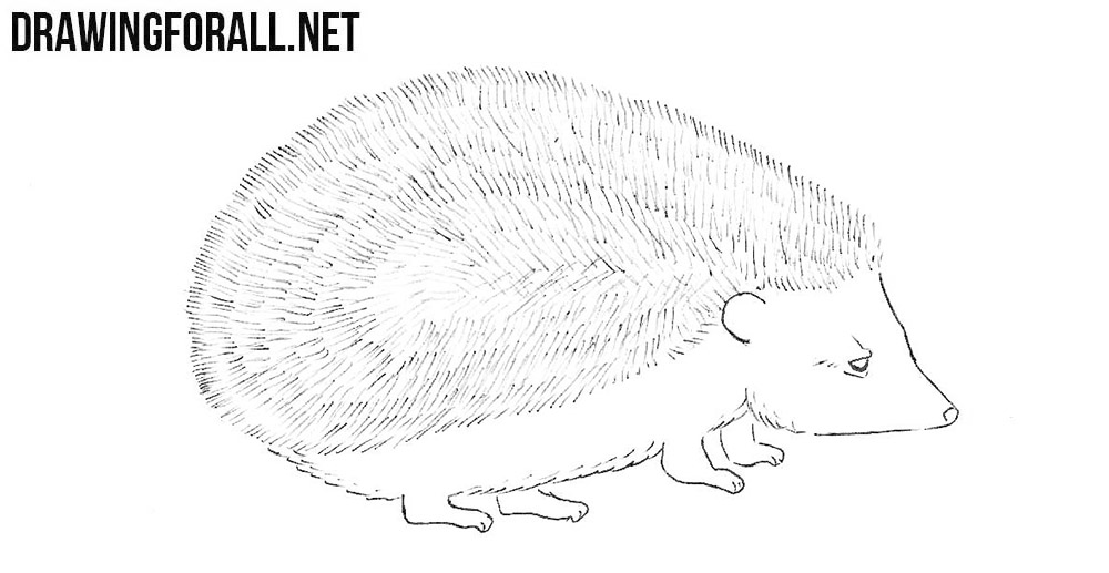 hedgehog drawing tutorial
