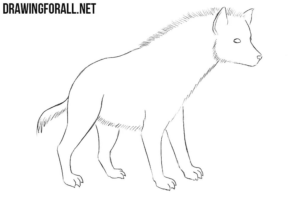 how to draw a hyena step by step
