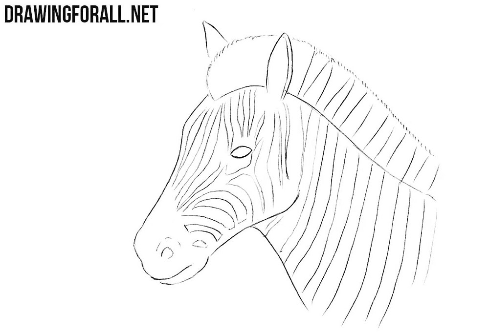 zebra head drawing tutorial