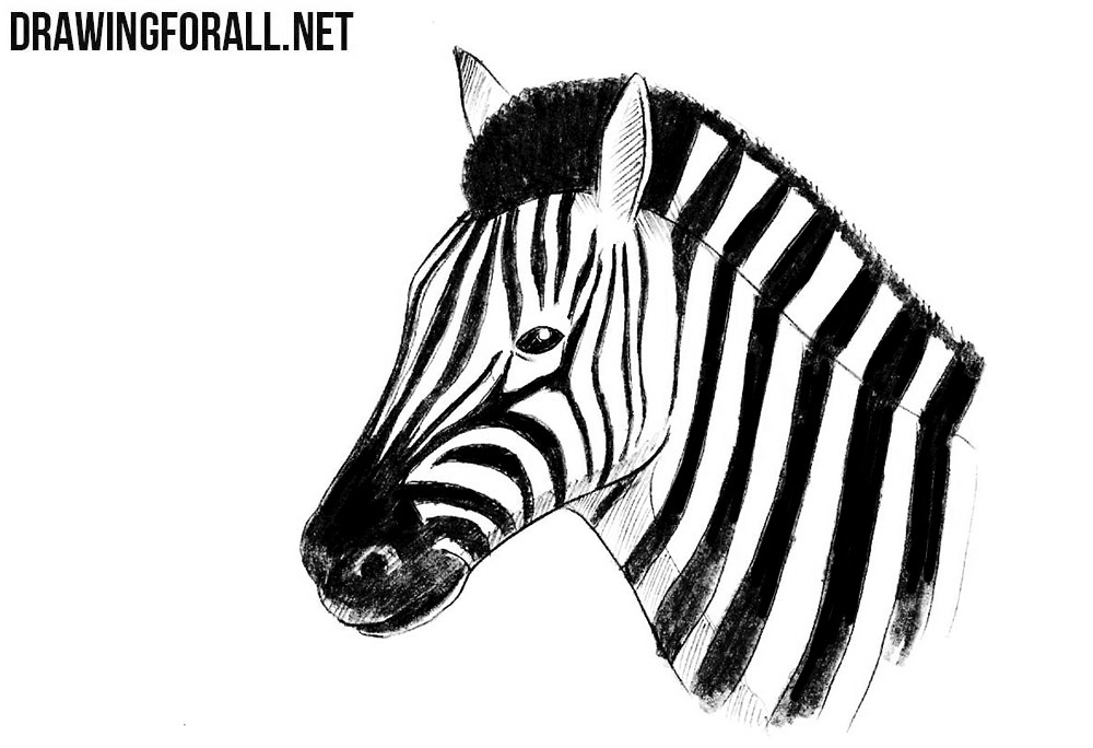 How to Draw a Zebra Head | Drawingforall.net