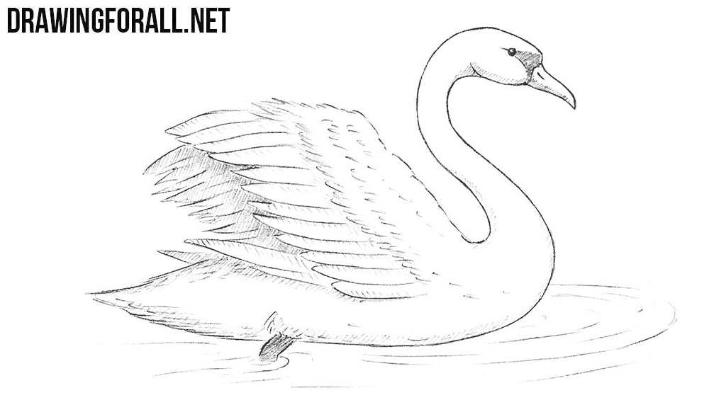 How to draw a swan for Drawing websites that you can draw on
