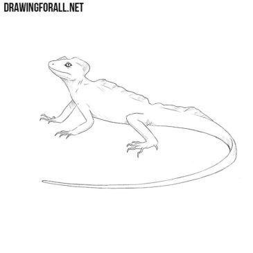How to Draw a Basilisk Lizard