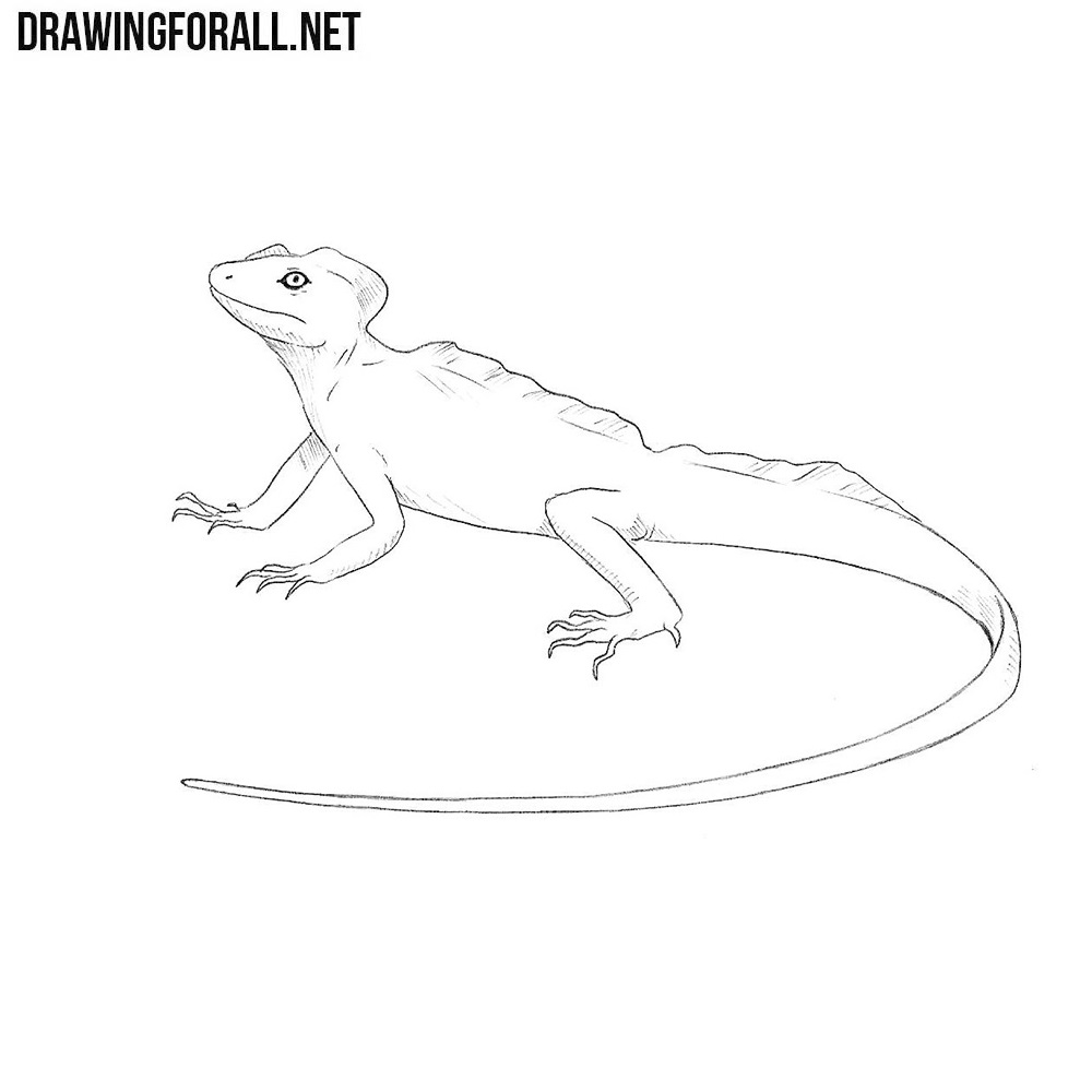 How to Draw a Basilisk Lizard | DrawingForAll.net for House Lizard Drawing  8lpfiz