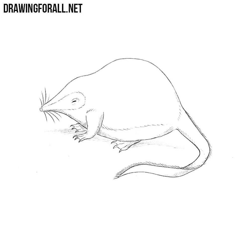 How to Draw a Desman