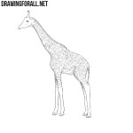 How to Draw a Giraffe