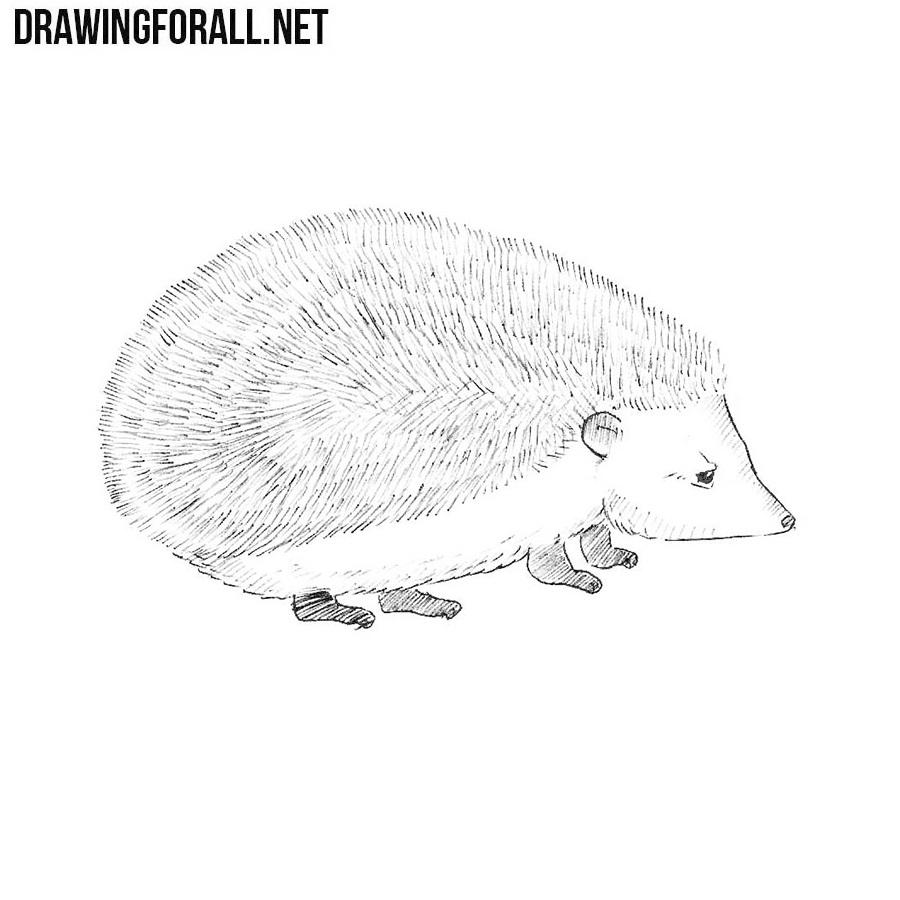 Line Drawing Hedgehog : How to draw a hedgehog drawingforall