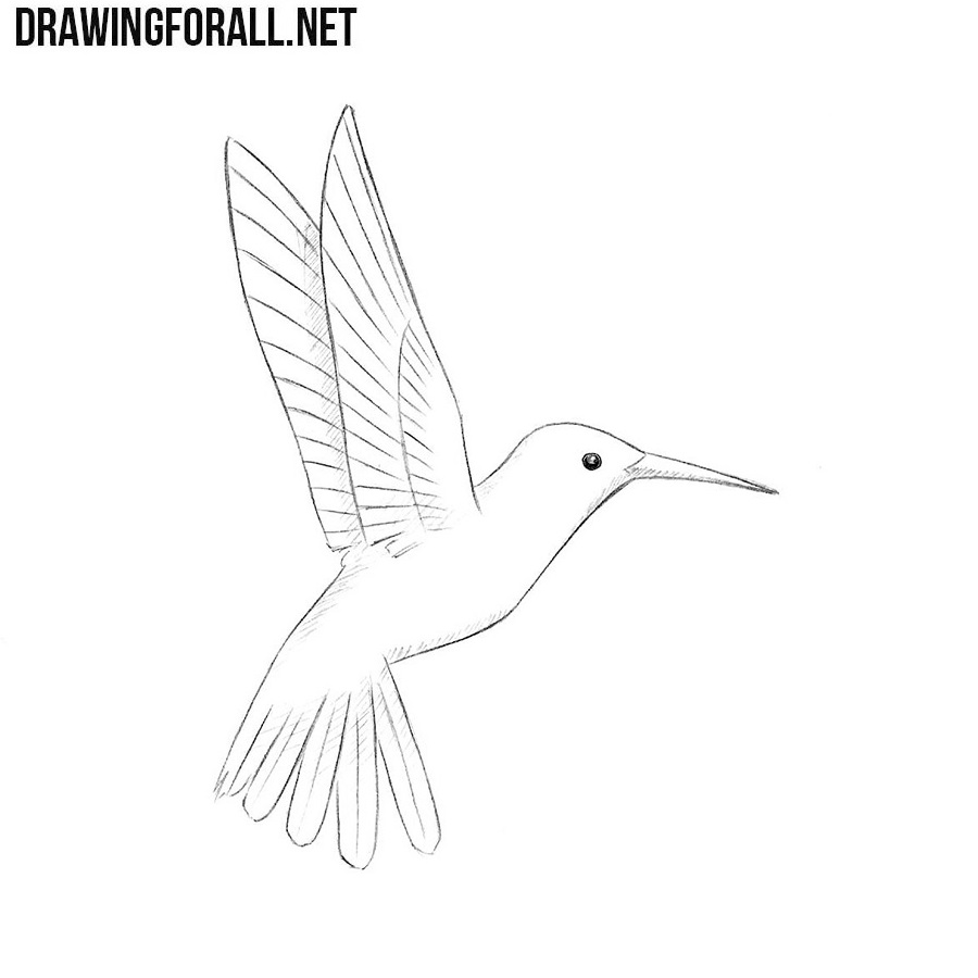 How to Draw a Humming Bird | DrawingForAll.net