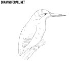 How to Draw a Kingfisher
