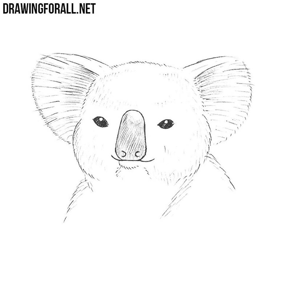 How to Draw a Koala Head | DrawingForAll.net