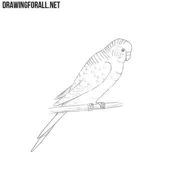 How to Draw a Parrot
