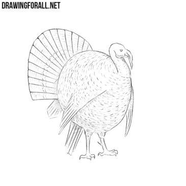 How to Draw a Turkey