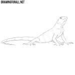 How to Draw an Iguana