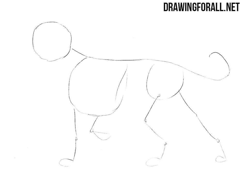 How to Draw a Nemean Lion | DrawingForAll.net