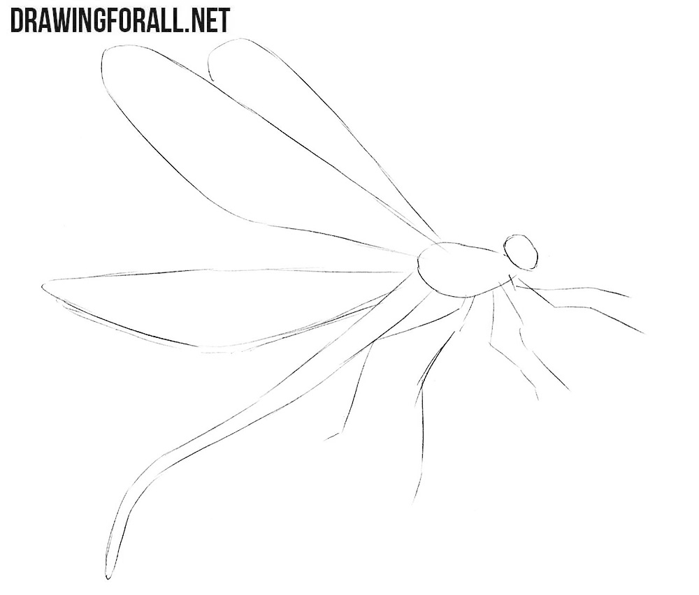 Dragonfly drawing lessons