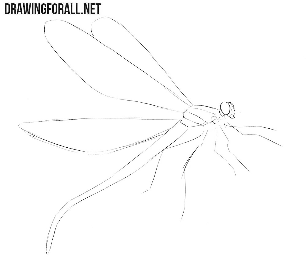 Learn how to draw a dragonfly