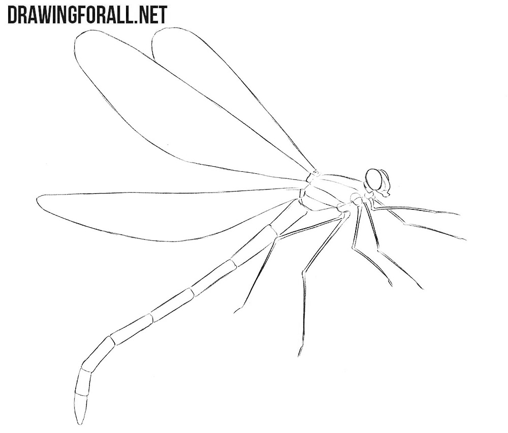Dragonfly drawing tutorial