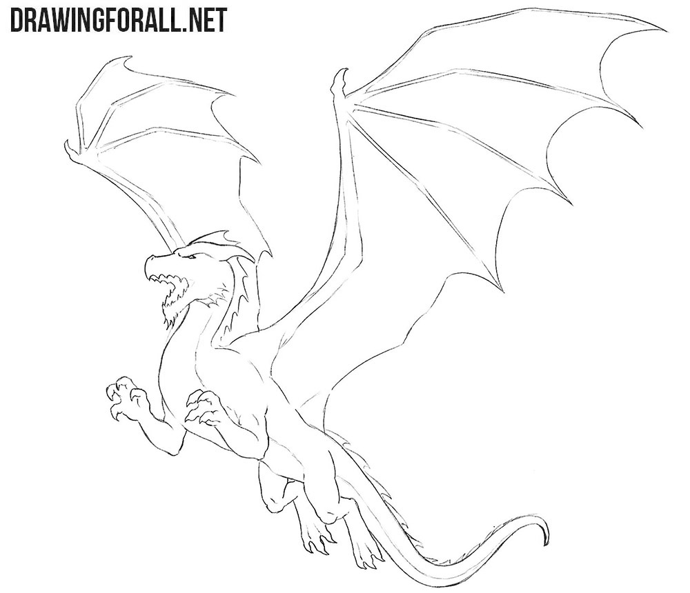 Dragon for beginners drawing tutorial