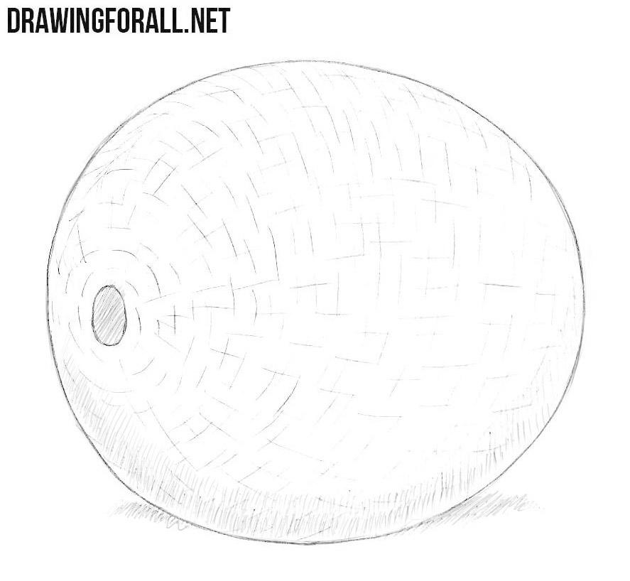 Melon drawing