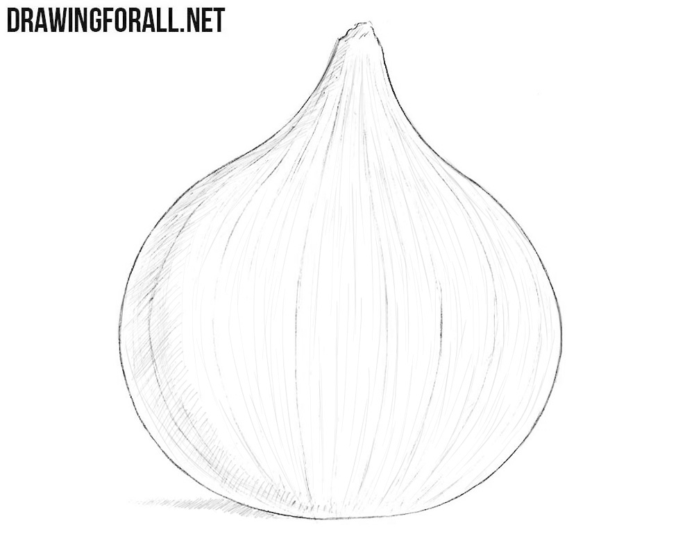 Onion drawing