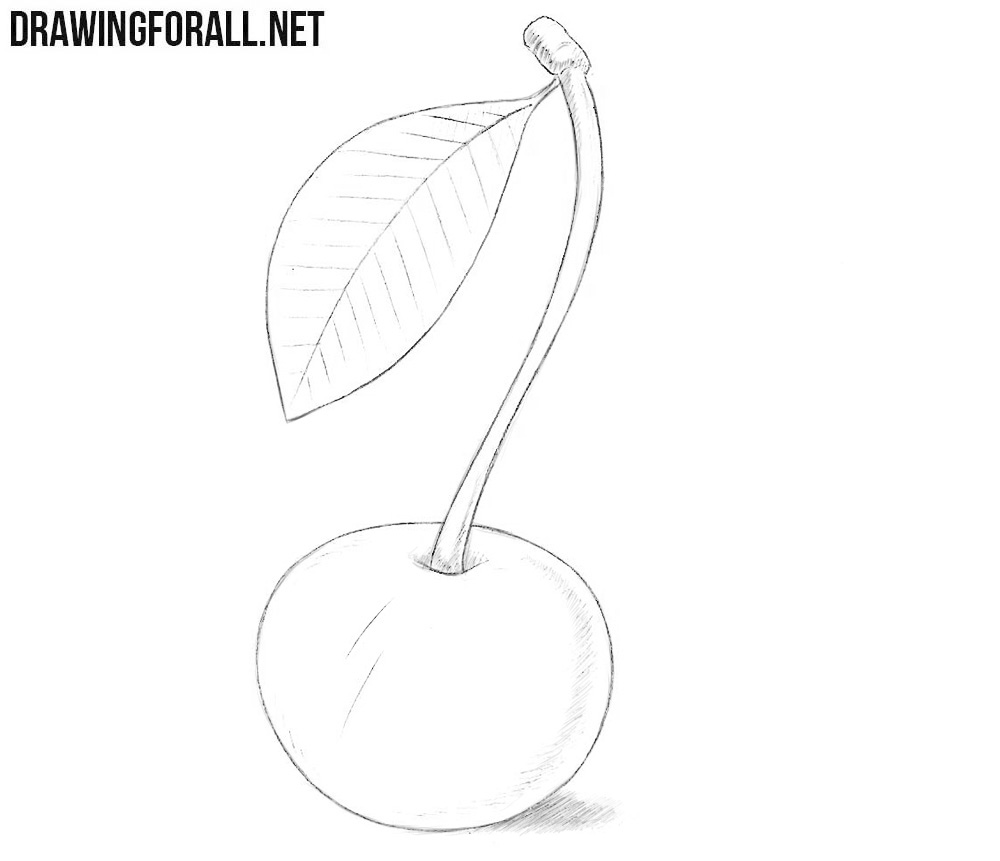 Wild cherrWild cherry drawingy drawing