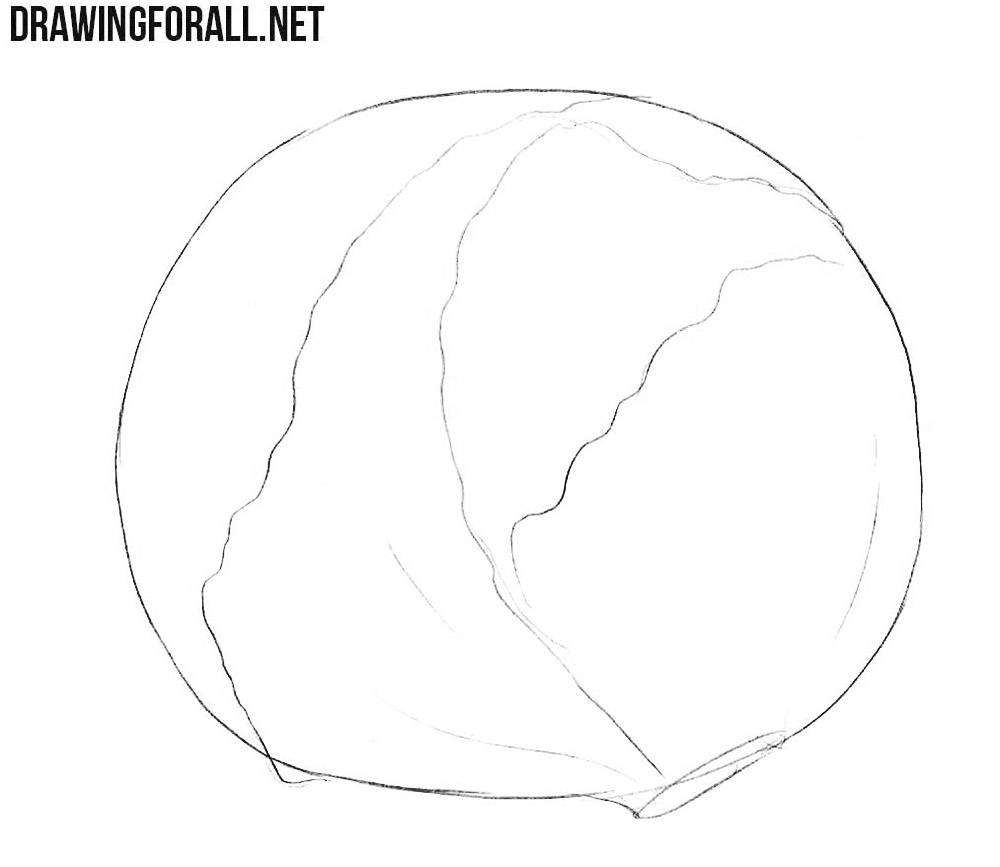 Learn how to draw a cabbage step by step