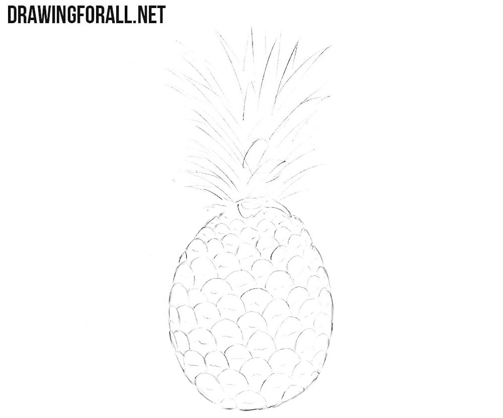 How to sketch a pineapple