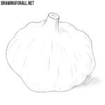 How to Draw a Garlic