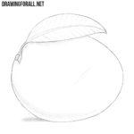 How to Draw a Mango