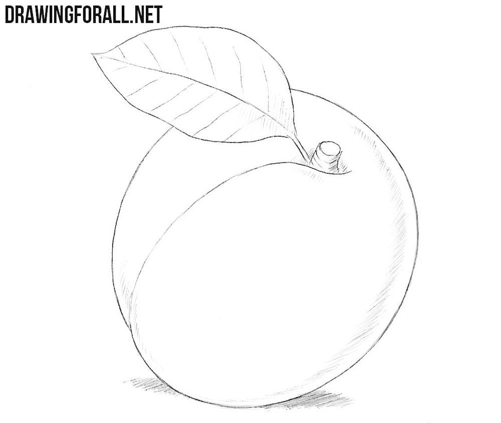 Apricot drawing