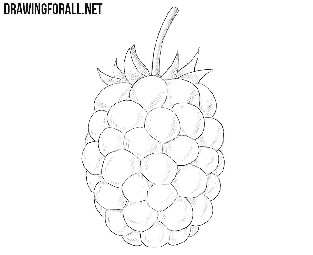 Blackberry drawing