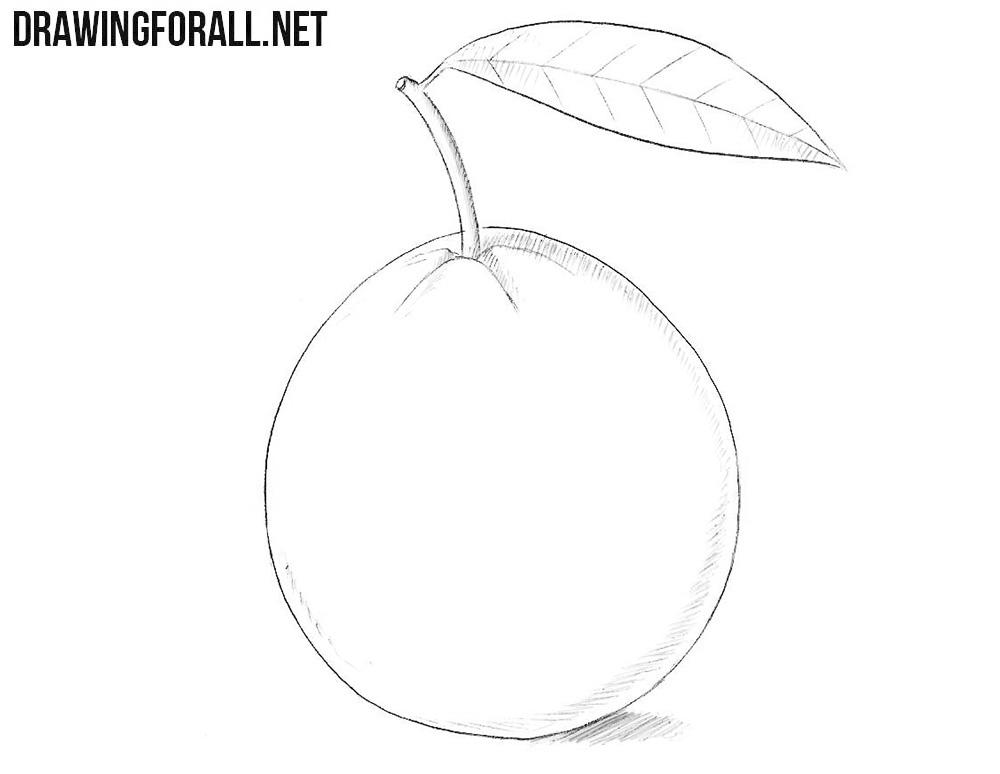 Guava drawing
