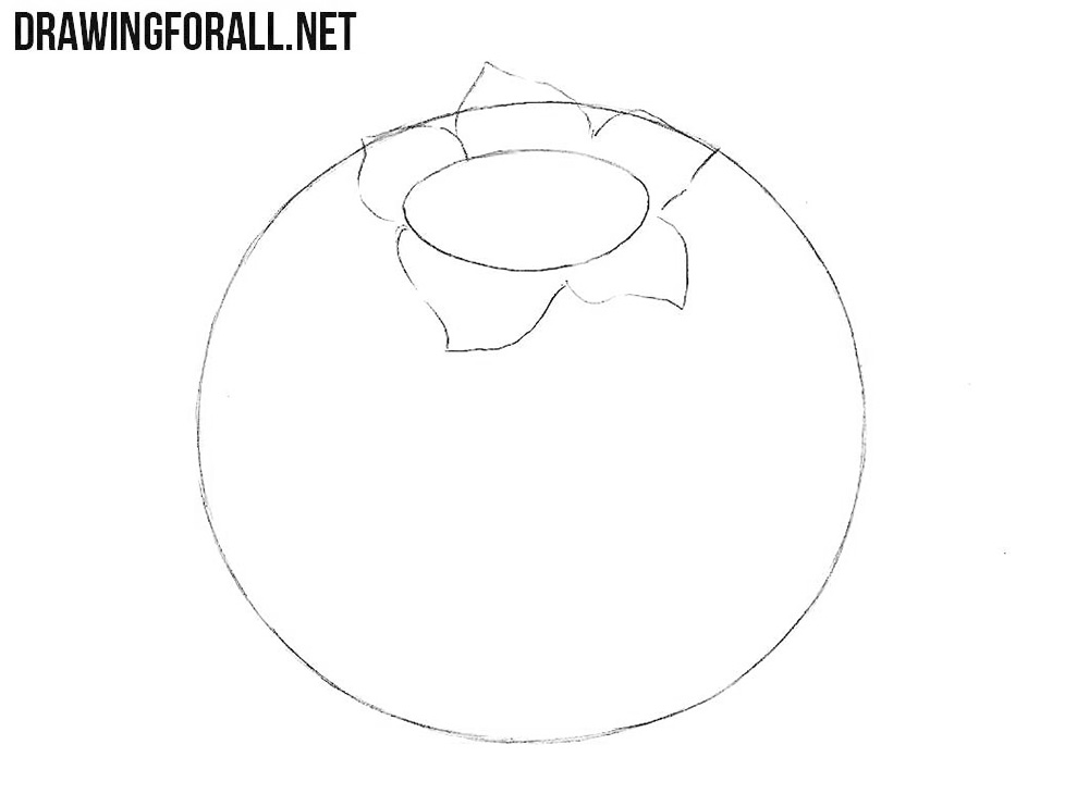 How to draw a blueberry step by step
