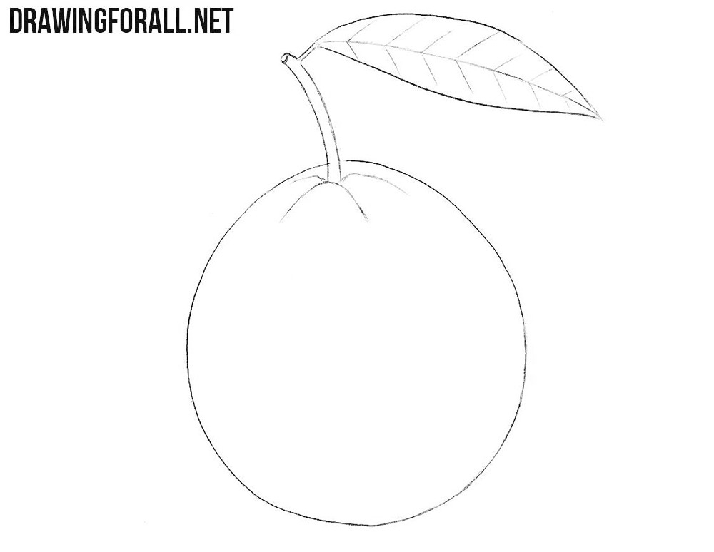 How to draw a Guava fruit
