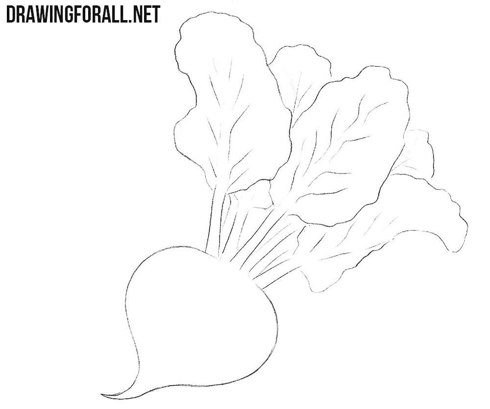 How to draw a beet easy